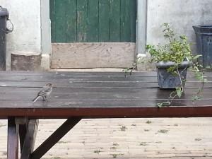 Jong kwikstaartje 3 augustus 2013